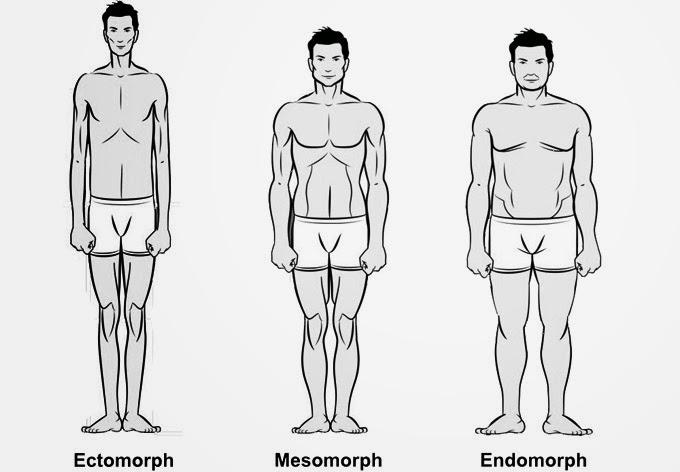 Male-body-types